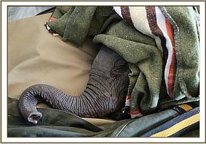Tamiyoi schläft während des Fluges