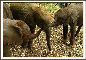Taita is welcomed into the nursery fold by Sunyei and Selengai