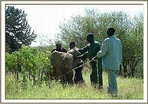 Mpala is captured