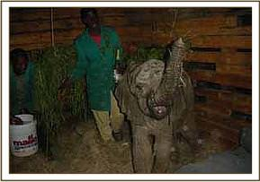 Mpala arrives at the nursery after five hours on the road