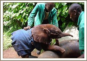 Sunyei playing with her Keepers