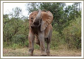Ein glücklicher Elefant draußen im Wald