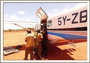 Das Kalb wird in das Flugzeug geladen