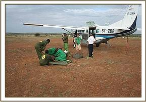 The rescue scene at the Loisaba airstrip.jpg