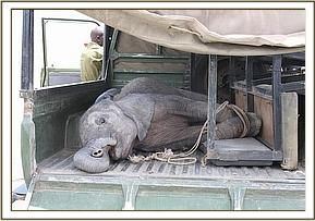 Shira in the back of the landcruiser at Amboseli airstrip.jpg