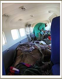 The orphan loaded in the rescue plane