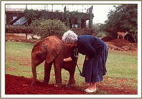 Dr. Daphne Sheldrick with Dika