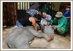 The Nairobi Vet examines the trunk