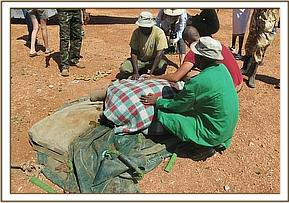 getting care from the DSWT elephant keeper rescue team