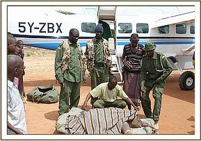 The Keepers prepare the orphan for the flight to Nairobi