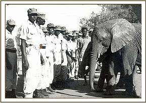 eleanor inspects the parade, Tsavo East National Park