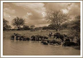Dika in the waterhole with all the orphans