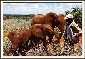 Ndara left, Tsavo and Emily