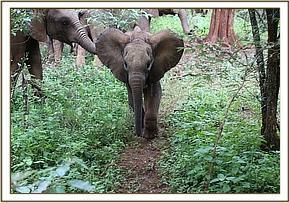 Sana Sana geht zum ersten Mal in den Wald hinaus