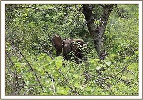 Das verwaiste Kalb im Busch