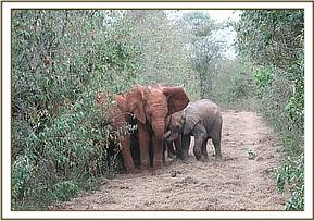 Taveta on his first day out in the bush with the other orphans, the day after he arrives in Nairobi.