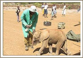 The calf follows the DSWT Keepers to the rescue plane