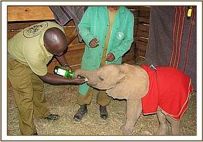 Tano having re-hydrate fluid upon arrival the the Nursery