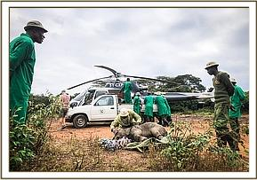 Meru landing in Nairobi with the DSWT helicopter