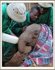 Maramoja bekommt ihre erste Milchflasche