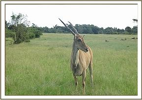 The eland fully recovered