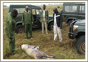 The team monitoring the lion post-treatment