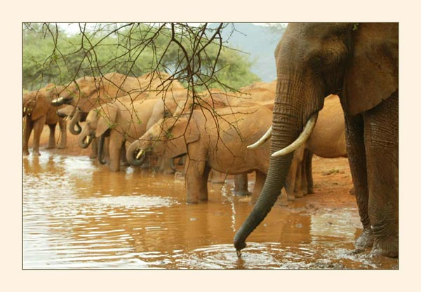 Elephant emotion sciox Images