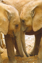 Lovingkindness Copyright The David Sheldrick Wildlife Trust