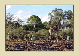 Nursery orphans with giraffe