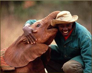 Adopt an Orphaned Elephant