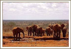 Laikipia waiting to welcome a wild group