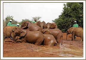 mudbath time for the nursery orphans