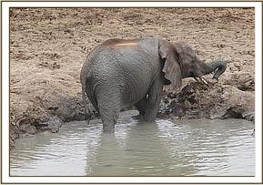Sunyei in the mudbath