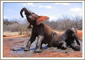 Tomboi and Olmalo having a mud bath
