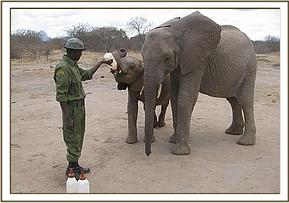 Lualeni watches over Ololoo as he drinks milk