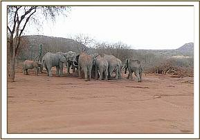 Ol Malo and wild elephants