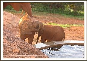 Emma and Safi drinking from the trough