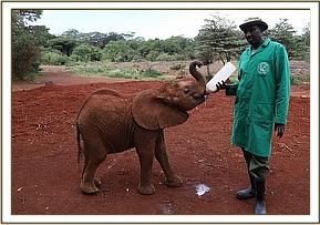 Kiasa having milk