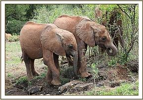 Maisha and Emoli avoided their playful friends