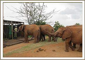 Lesanju's group welcomes the new orphans