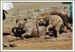 Rapsu & Kora with the other orphans at mudbath