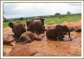 Orphans in mud bath enjoyment