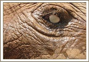 Close up of Kitirua's bad eye