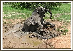 Galana plays in mud