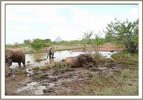 Orphans wallowing in the bush