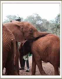 Turkwel giving Kainuk a hug