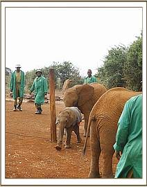 Little Dida running through the bigger orphans