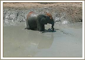 Ithumbah in the mudbath