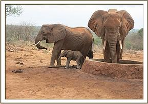 Mother with her baby and other wild eles