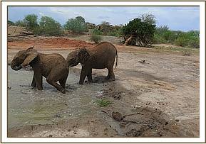 Narok and Laragai at the mudbath